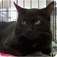 Adopt A Pet :: Max W - Sacramento, CA