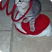 Adopt A Pet :: Gavin - Sterling Hgts, MI
