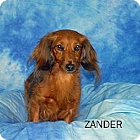 Adopt A Pet :: Zander - Ft. Myers, FL
