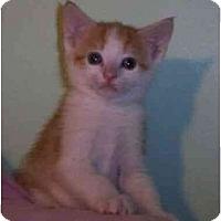 Adopt A Pet :: Halo - Reston, VA