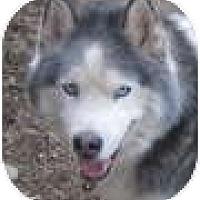Adopt A Pet :: Siku - Kettle Falls, WA