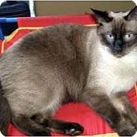 Adopt A Pet :: Max & Alex - Alexandria, VA