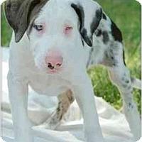 Adopt A Pet :: Finn - Seymour, CT