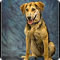 Adopt A Pet :: Ellie Mae - Wickenburg, AZ