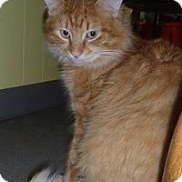 Adopt A Pet :: Gorman - Hamburg, NY