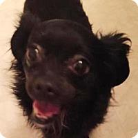 Adopt A Pet :: BABYDOG - Portland, OR