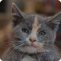 Adopt A Pet :: Boop - Brooklyn, NY