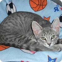 Adopt A Pet :: Nestle - Chesapeake, VA