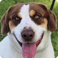 Adopt A Pet :: WESLEY - Red Bluff, CA