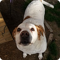 Adopt A Pet :: Lexie~Adoption Pending - Davenport, IA