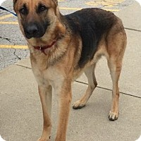 Adopt A Pet :: ACER - Rossford, OH