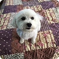 Adopt A Pet :: OLIVER - Traverse City, MI