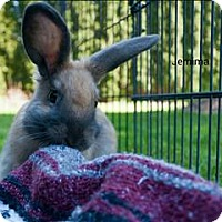 Dutch Mix for adoption in Vancouver, British Columbia - Jemima