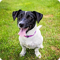 Adopt A Pet :: Mica - Marcellus, MI