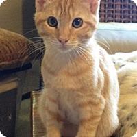 Adopt A Pet :: Denver - North Highlands, CA