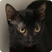 Adopt A Pet :: Linda - Red Bluff, CA