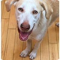 Adopt A Pet :: Kloe ((pending) - Coldwater, MI