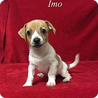 Adopt A Pet :: Imo - Chester, IL