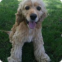 Adopt A Pet :: Skipper - Santa Barbara, CA