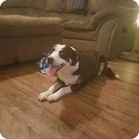 Adopt A Pet :: Angel - Warren, MI