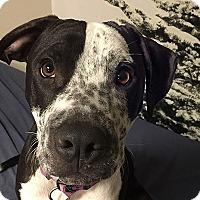 Adopt A Pet :: Mister Cooper - Durham, NC