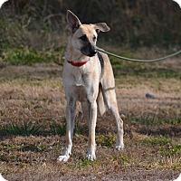 Adopt A Pet :: Sammy - Lebanon, MO