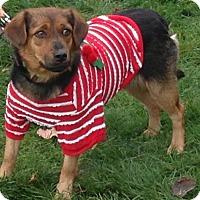 Adopt A Pet :: 45790 Ginger - Zanesville, OH