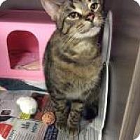 Adopt A Pet :: Akira - Janesville, WI