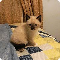 Adopt A Pet :: Nimbus - North Wilkesboro, NC