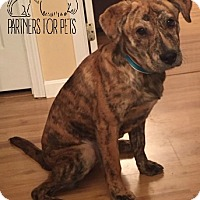 Adopt A Pet :: Mika Fostered (Leigh) - Troy, IL