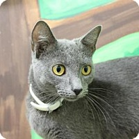 Adopt A Pet :: Blue Bell - Knoxville, TN