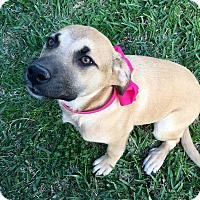 Adopt A Pet :: Josey - Calgary, AB