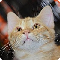 Adopt A Pet :: Erique - Harrisburg, NC