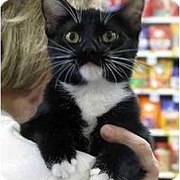 Adopt A Pet :: Buddi - Monroe, GA