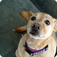 Adopt A Pet :: TAMMY - Valley Village, CA