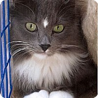 Adopt A Pet :: Starlight - Davis, CA