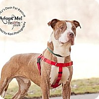 Adopt A Pet :: Centar - Medina, OH