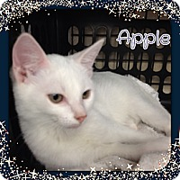 Adopt A Pet :: Apple - Bradenton, FL