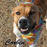 Adopt A Pet :: Corbin OKs31 - Davis, OK