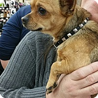 Adopt A Pet :: Bear - Ogden, UT
