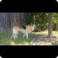 Adopt A Pet :: Martha Jo - Houston, TX