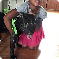 Adopt A Pet :: Patrick - Dayton, OH