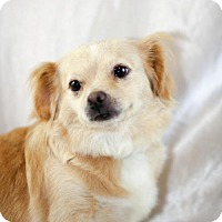 Adopt A Pet :: Stella-available in August - Little Rock, AR