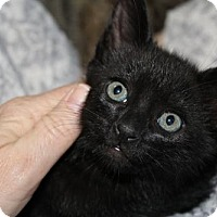 Adopt A Pet :: Leroy H - Melbourne, FL