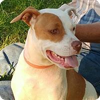 Adopt A Pet :: Pinky - Eastpointe, MI