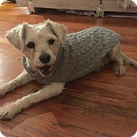 Adopt A Pet :: Betsy - Denver, CO