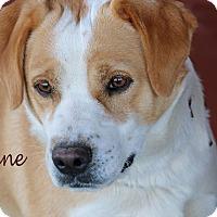 Adopt A Pet :: Cane - Idaho Falls, ID