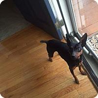 Adopt A Pet :: Rocky - benson, NC