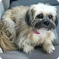 Adopt A Pet :: Brussels Sprout - Phoenix, AZ