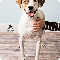 Adopt A Pet :: Midge - Hendersonville, NC
